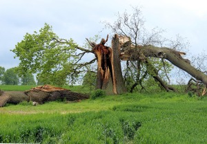 tree damage from storm